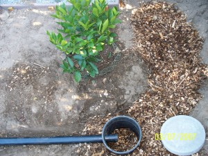 Branched Drain Mulch Basin