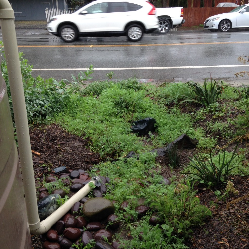 Overflow to Rain Garden